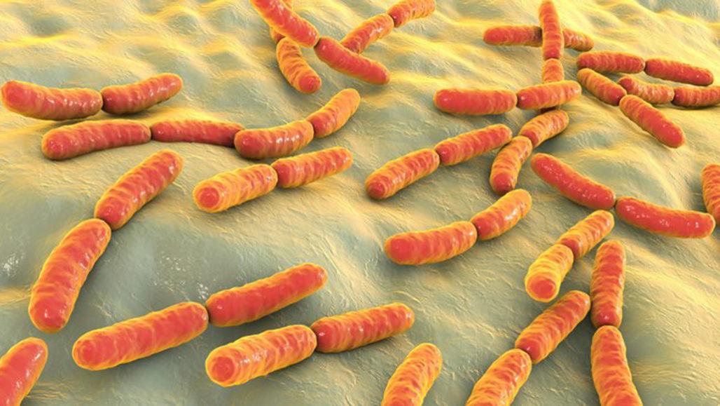 Mikrobiyom Deposu